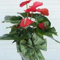 Green Plants (2)