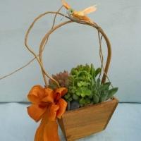 Green Plants (3)