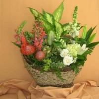 Green Plants (4)