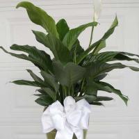 Green Plants (5)