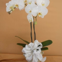 orchid collection (2)