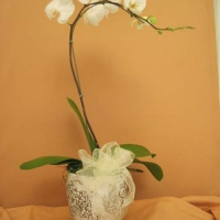 orchid collection (3)