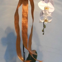 orchid collection (4)
